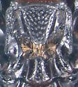 Histerid - Plegaderus