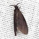 Nigrita Bagworm Moth - Hodges #441 - Cryptothelea nigrita - male