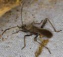 Probably a Bug - Alydus