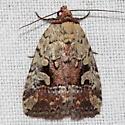 Festive Midget Moth - Elaphria festivoides