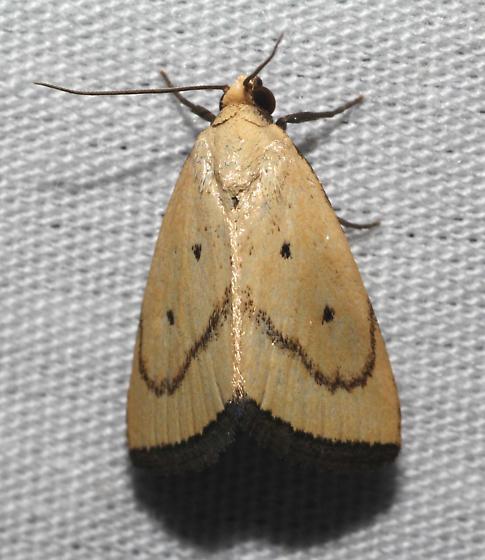 Marimatha Moth - Marimatha