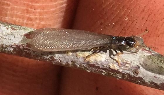Termite swarm