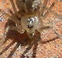Spider #08-18