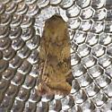 Catocaline Dart - Cryptocala acadiensis