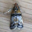 Poplar Bud Borer Moth (Meroptera cviatella) Maybe