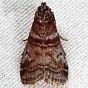 Unknown Micromoth - Sciota uvinella