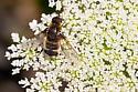 Bee Fly - Villa? - Villa