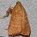 Parachma ochracealis