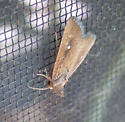 White-dotted Groundling - Condica videns