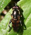 Fly ID Request - Tropidia albistylum
