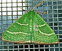 Emerald  - Nemoria intensaria - male