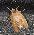 Moth - orange-white mottling