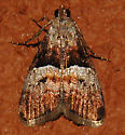 Small Moth - Pococera robustella