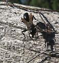Sphecidae 01b