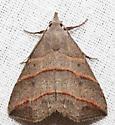 Colobochyla interpuncta