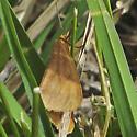 Virbia sp. maybe - Virbia ferruginosa
