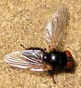 Small fly
