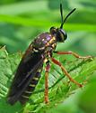 Ceraturgus fasciatus? - Ceraturgus fasciatus