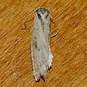 Eana species - probably osseana (Hodges # 3570) - Eana