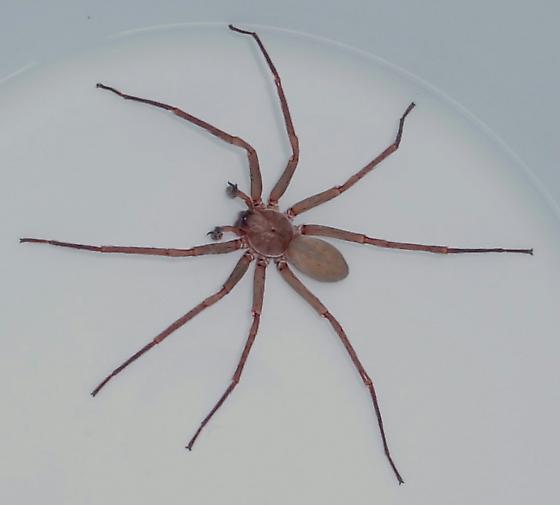 Basement Bugs: Brinn's Basement Spider