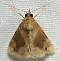 Brown and tan moth - Hypena manalis