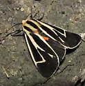 unkn Tiger Moth - Apantesis vittata