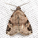 Aerial Brown Moth - Hodges #9030 - Ozarba aeria