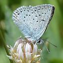 Butterfly species?