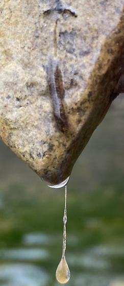 Larvae or egg rafts ? in Gel under Rock in Stream