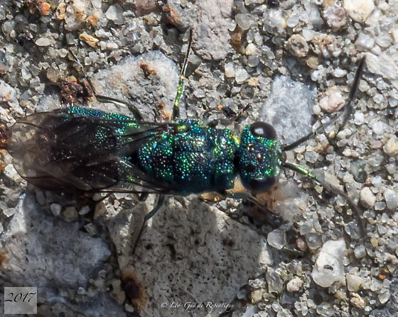 Hymenoptera. Apidae.