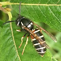 Wasps - Vespula intermedia