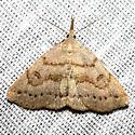 Moth sp. - Chytolita morbidalis