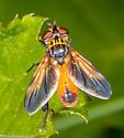 fly - Trichopoda