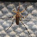 In my car! - Psorophora ciliata - female