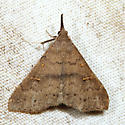 Speckled Renia - Renia adspergillus