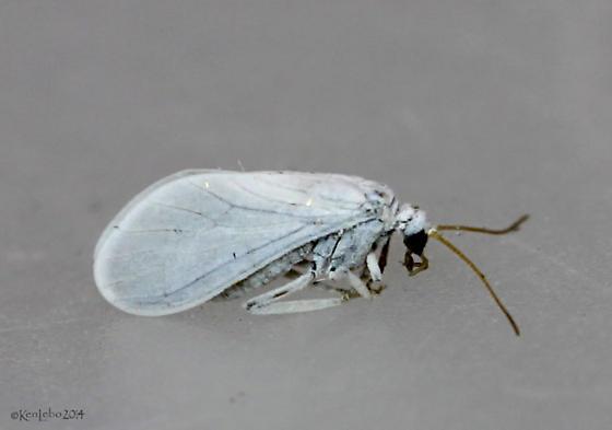 caddisfly?
