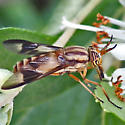 deer fly - Chrysops flavidus - female