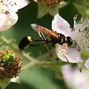 Black and Yellow Mud Dauber - Sceliphron caementarium