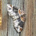 Red Twin Spot Moth (Xanthorhoe ferrugata)? - Xanthorhoe