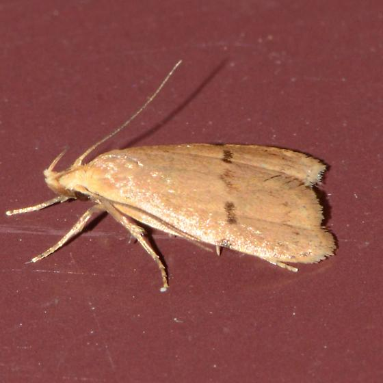 No. 317 Unknown moth?