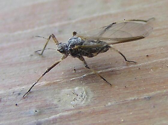 Small bug to ID if possible. - Cinara