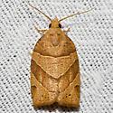 Woodgrain Leafroller - Hodges#3593 - Pandemis lamprosana
