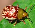 sumac flea beetle Blepharida rhois? - Blepharida rhois