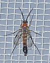 Olbiogaster