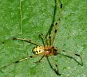 spider070418b