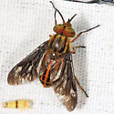 Deer Fly - Chrysops aberrans - male
