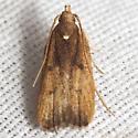 Glyphidocera Moth - Hodges #1143.97 - Glyphidocera