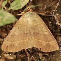 Red-lined Panopoda - Hodges#8587 - Dorsal - Panopoda rufimargo