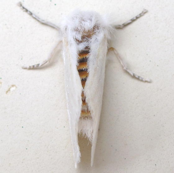 BG Gathering - Moth ID Request