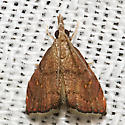 5456 - Microcausta flavipunctalis